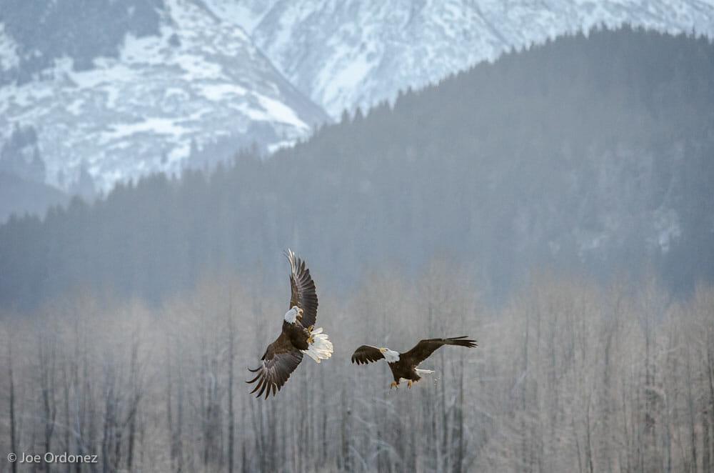 In flight battle