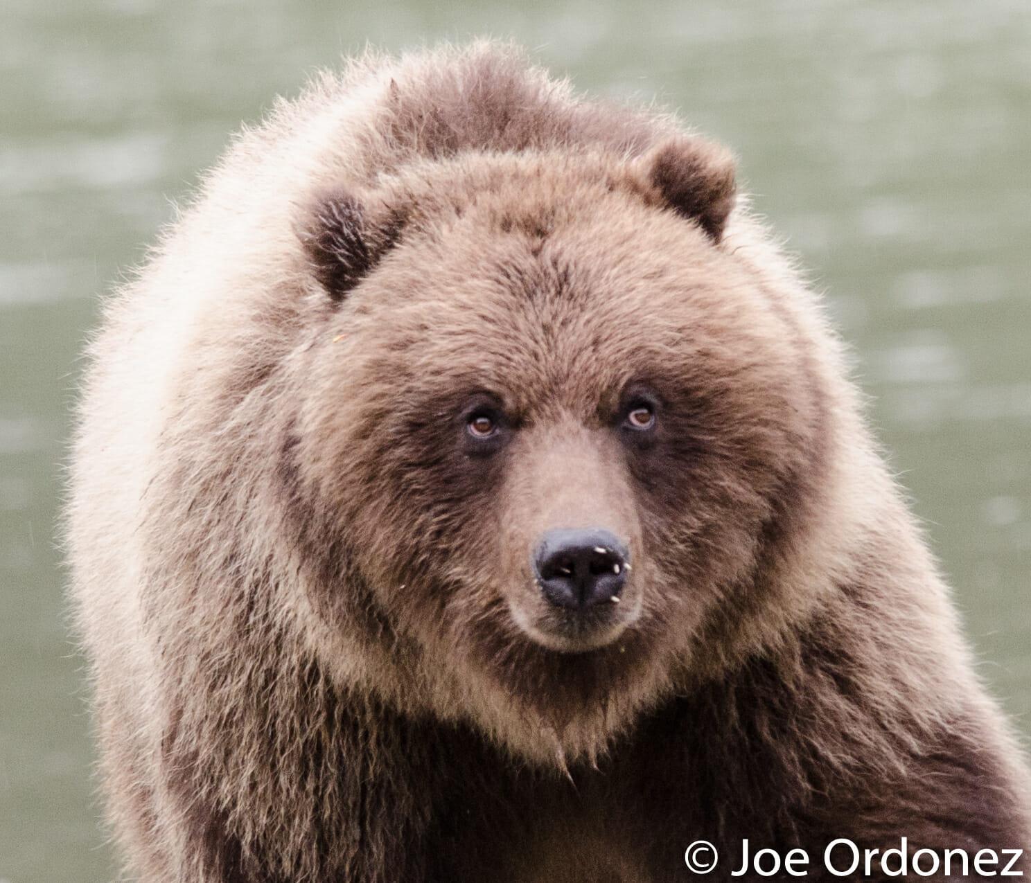 DSC_bear horizontal quills