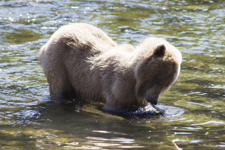Haines Alaska Wildlife Tours